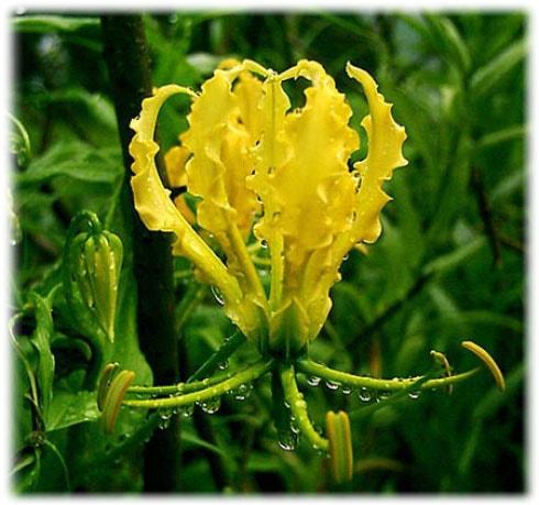 Комнатные цветы из семян: как вырастить в домашних условиях 33