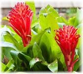 Комнатные растения с фото