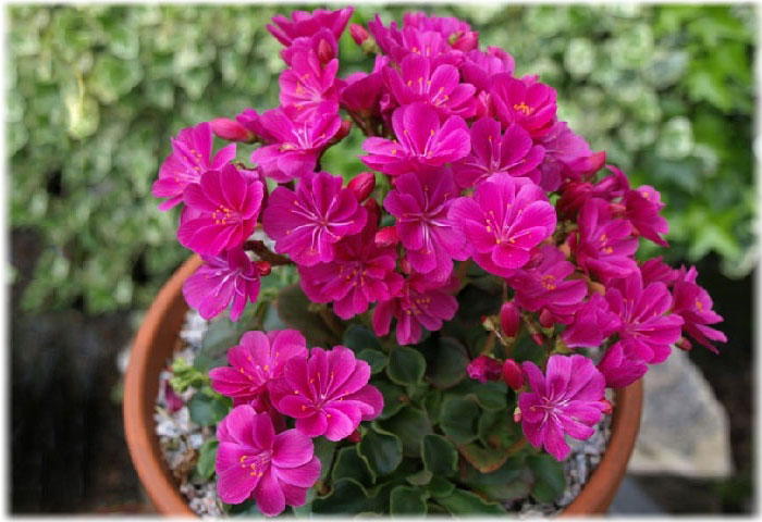 Каталог садовых цветов с фото