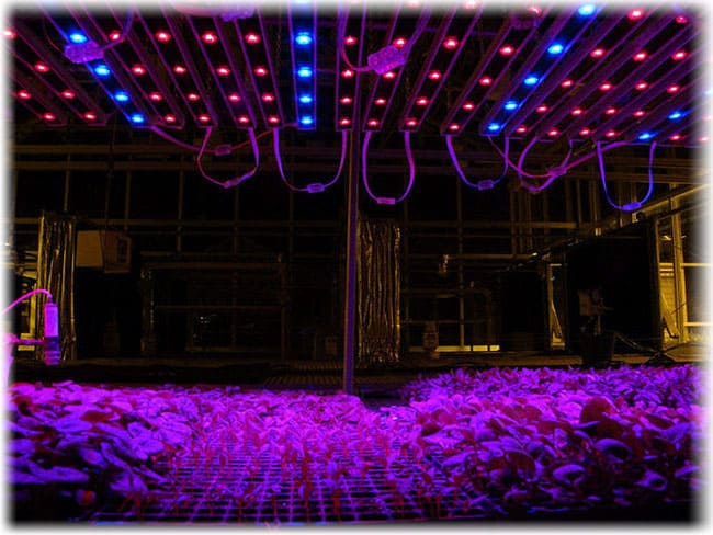Подсветка растений - лента