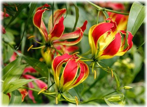 Комнатные цветы из семян: как вырастить в домашних условиях 19